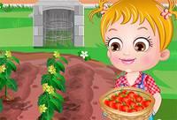 Хейзел Выращивает Томаты - Baby Hazel Tomate Farming